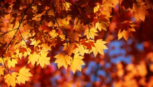 benefits of selling in autumn sydney